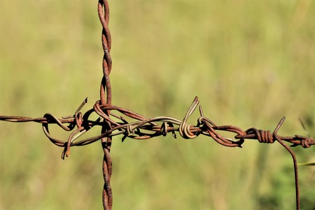 Close-up of tangled section of rusty barbed wire on a blurred green background.