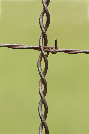 Close-up of a cross section of a barbed wire fence on a light green background. Stock Photo