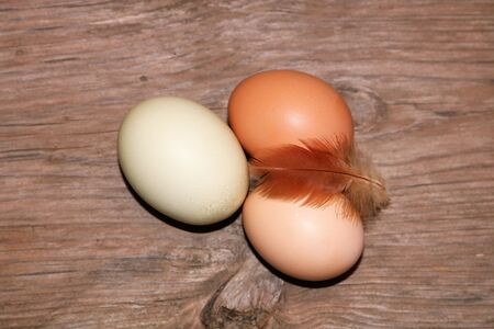 Top view of three farm fresh brown and green eggs lying on a wood table with a small red chicken feather.