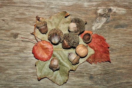 Top view of green and orange autumn leaves, acorns, and walnut, on a wood grain background.