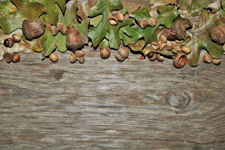 Acorns and green and brown autumn leaves frame the top of a wood grain background with copy space. Stock Photo