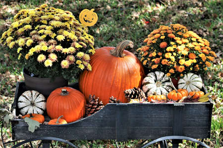Pumpkins, pine cones and yellow and orange chrysanthemum flowers in a green wood wagon. Stock Photo