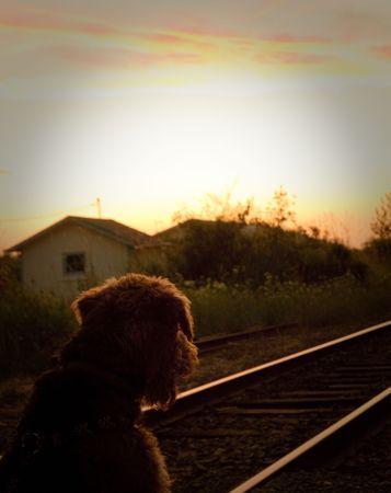 Hund auf der Suche in den Sonnenuntergang