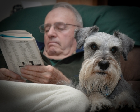 miniature dog: Man and his dog companion doing crossword puzzle Stock Photo