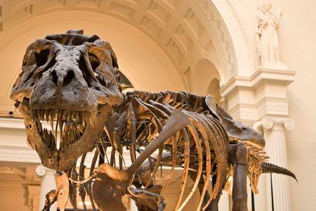 fossils: rex  Stock Photo