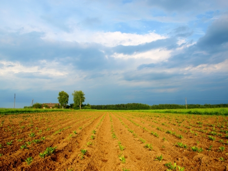 Raw of potato field in the village Stock Photo