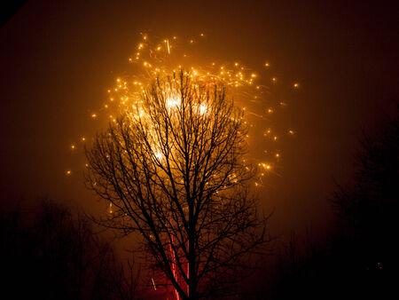Tree and Firework in the Night