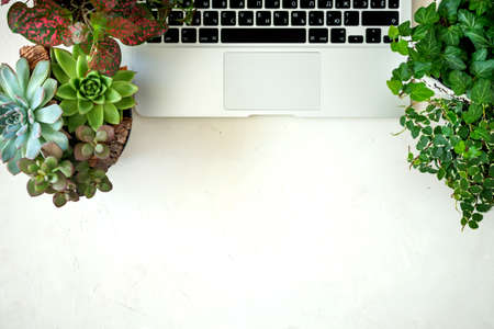 Remote online purchases of garden plants and equipment. A comfortable stylish freelancer's workplace with laptop and indoor plants succulents.
