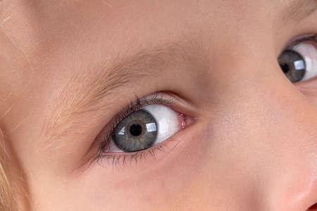 Macro close up young child blonde boys grey eye, blonde eyebrows and brown lashes. Caucasian light skin. Eye health care and medical vision concept.