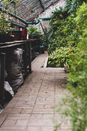 Greenhouse glasshouse sunny interior full of fresh green plants. Modern interior architecture design. Natural Indoor decorative plants. Lush botanical garden. Beautiful spring background. Reklamní fotografie