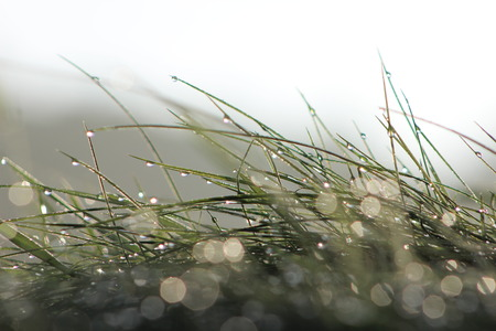 backlights: Morning dew on the grass with backlight Stock Photo