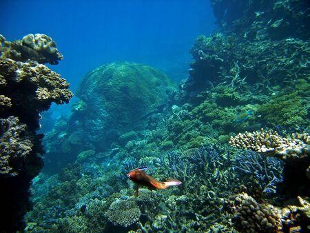 호주의 그레이트 배리어 리프 (Great Barrier Reef)에서 기생충의 작은 물고기를 청소합니다 스톡 콘텐츠