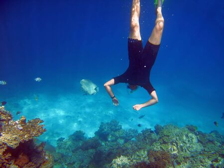 Snorkler swims towards fish at the Great Barrier Reef off the coast from Cairns, Australia Stock Photo
