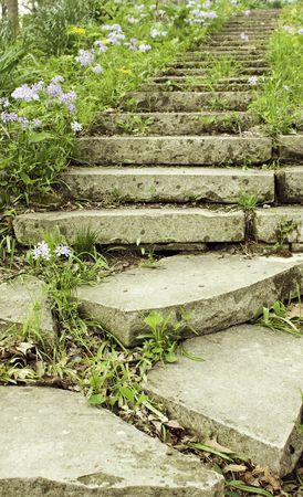 세로 방향으로 그늘진 정원 경로에 꽃 phlox 늘어서 돌 계단