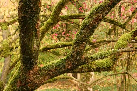 Moss-covered tree branches and fall foliage in an arboretum in the Netherlands photo