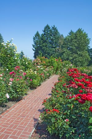 Flower beds at the National Rose Test Gardens in Portland, Oregon, with a red brick walkway and background of evergreen trees vertical Imagens