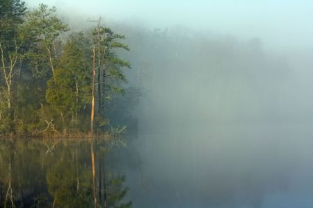 Pine trees reflecting off the water of College Creek on a misty morning near Williamsburg, Virginia