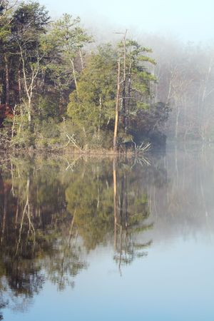 pine creek: Pine trees reflecting off the water of College Creek on a misty morning near Williamsburg, Virginia vertical