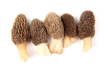 fruiting: Group of five gray morel mushroom (Morchella esculenta) fruiting bodies collected in a back yard in Indiana isolated against a white background
