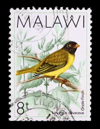 MALAWI - CIRCA 1987: An 8-tambala stamp printed in Malawi shows the oriole finch, Linurgus olivaceous, circa 1987