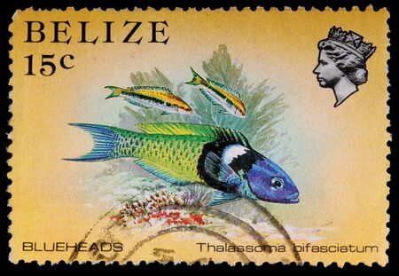 circa: BELIZE - CIRCA 1984: A 15-cent stamp printed in Belize shows the coral reef fish blueheads, Thalassoma bifasciatum, circa 1984