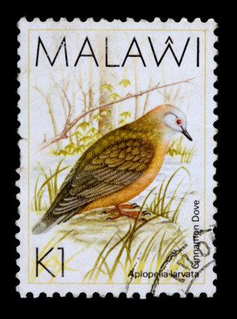 MALAWI - CIRCA 1987: A 1-kwacha stamp printed in Malawi shows the cinnamon dove, Aplopelia larvata, circa 1987