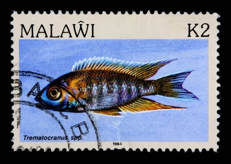 cichlid: MALAWI - CIRCA 1984: A 2-kwacha stamp printed in Malawi shows the freshwater cichlid fish Trematocranus, circa 1984