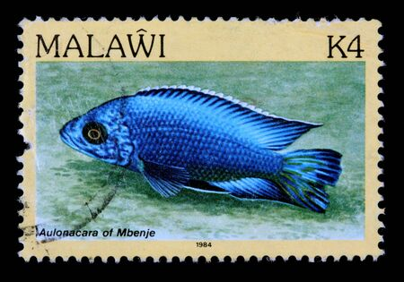 postmark: MALAWI - CIRCA 1984: A 4-kwacha stamp printed in Malawi shows the freshwater cichlid fish Aulonacara of Mbenje, circa 1984 Editorial