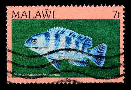 cichlid: MALAWI - CIRCA 1984: A 7-tambala stamp printed in Malawi shows the freshwater cichlid fish Pseodotropheus lombardoi, circa 1984 Editorial