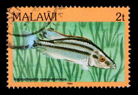 cichlid: MALAWI - CIRCA 1984:  A 2-tambala stamp printed in Malawi shows the freshwater cichlid fish Haplochromis compressiceps, circa 1984 Editorial