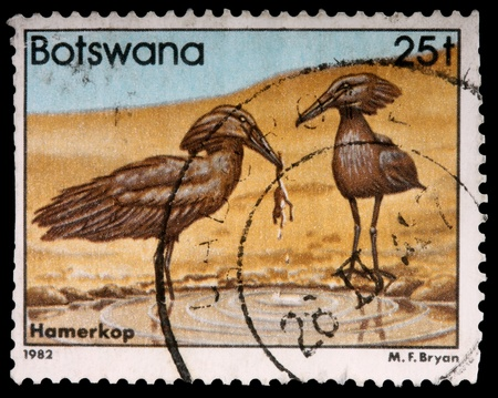 BOTSWANA - CIRCA 1982: A 25-thebe stamp printed in Botswana shows a hunting pair of hamerkop birds, circa 1982