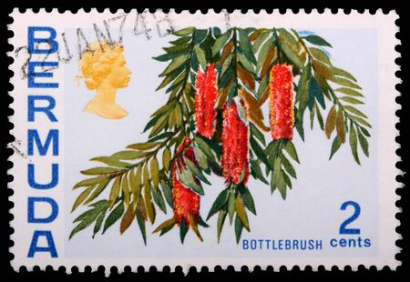 philately: BERMUDA - CIRCA 1970: A 2-cent stamp printed in Bermuda shows flowers and leaves of a bottlebrush plant, circa 1970