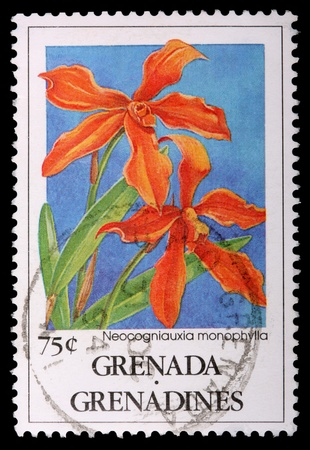 franked: GRENADA AND THE GRENADINES - CIRCA 1991: A 75-cent stamp printed in Grenada and the Grenadines shows the orchid Neocogniauxia monophylla, circa 1991