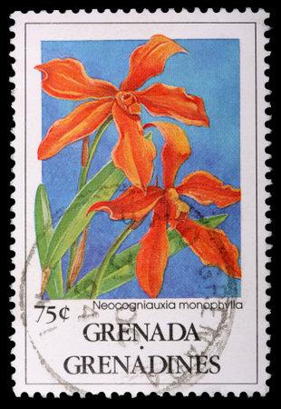 grenadines: GRENADA AND THE GRENADINES - CIRCA 1991: A 75-cent stamp printed in Grenada and the Grenadines shows the orchid Neocogniauxia monophylla, circa 1991