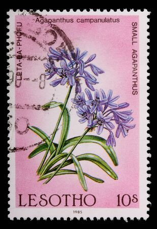 LESOTHO - CIRCA 1985: A 10-sente stamp printed in the Kingdom of Lesotho shows flowers and plant of the small agapanthus, Agapanthus campanulatus, circa 1985