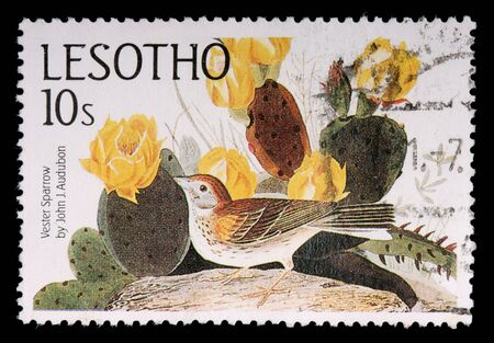 postage stamp: LESOTHO - CIRCA 1985: A 10-sente stamp printed in the Kingdom of Lesotho shows the vesper sparrow, Pooecetes gramineus, and cactus flowers by John J. Audobon, circa 1985