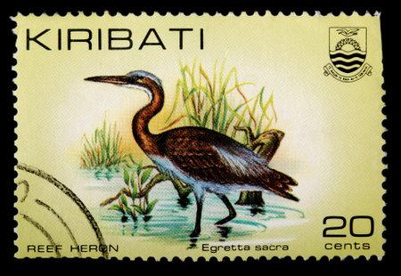 sacra: KIRIBATI - CIRCA 1982: A 20-cent stamp printed in the Republic of Kiribati shows the reef heron bird, Egretta sacra, circa 1982