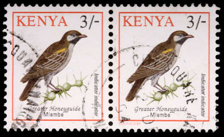 thorn bush: KENYA - CIRCA 1993: Two 3-schilling stamps printed in Kenya show the greater honeyguide bird, Indicator indicator, and thorn bush, circa 1993