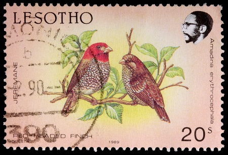 postmark: LESOTHO - CIRCA 1989: A 20-sente stamp printed in the Kingdom of Lesotho shows the red-headed finch, Amadina erythrocephala, circa 1989 Editorial