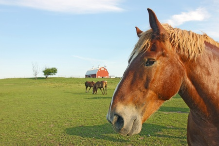 Portrait of a horse at Prophetstown State Park, Tippecanoe County, Indiana, with a barn in the background, green grass, blue sky and space for copy photo