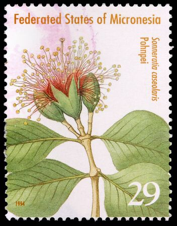 FEDERATED STATES OF MICRONESIA - CIRCA 1994: A 29-cent stamp printed in the Federated States of Micronesia shows leaves and flowers of the crabapple mangrove tree, Sonneratia caseolaris, on Pohnpei Island, circa 1994 Editorial