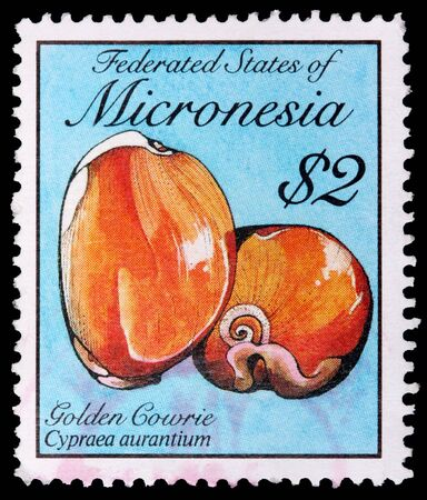 FEDERATED STATES OF MICRONESIA - CIRCA 1989: A 2-dollar stamp printed in the Federated States of Micronesia shows the golden cowrie snail shell, Cypraea aurantium, circa 1989