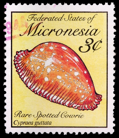 FEDERATED STATES OF MICRONESIA - CIRCA 1989: A 3-cent stamp printed in the Federated States of Micronesia shows the rare spotted cowrie snail shell, Cypraea guttata, circa 1989 Editöryel