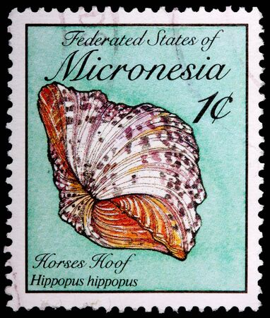 FEDERATED STATES OF MICRONESIA - CIRCA 1989: A 1-cent stamp printed in the Federated States of Micronesia shows the horses hoof clam shell, Hippopus hippopus, circa 1989