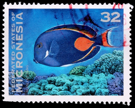 micronesia: FEDERATED STATES OF MICRONESIA - CIRCA 1996: A 32-cent stamp printed in the Federated States of Micronesia shows the Achilles tang fish (Acanthurus achilles), and coral, circa 1996 Editorial