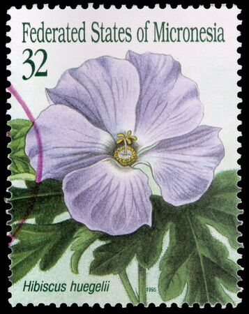 franked: FEDERATED STATES OF MICRONESIA - CIRCA 1995: A 32-cent stamp printed in the Federated States of Micronesia shows leaves and a flower of the hibiscus, Hibiscus huegelii, circa 1995 Editorial