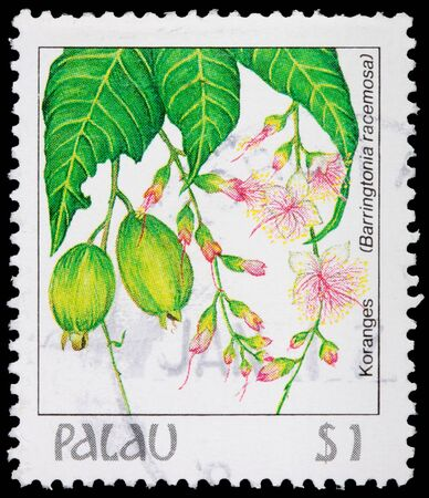 postage stamp: PALAU - CIRCA 1987: A 1-dollar stamp printed in the Republic of Palau shows leaves, flowers and fruit of the powder-puff tree, Barringtonia racemosa, circa 1987 Editorial