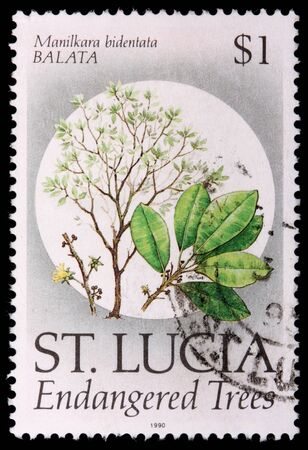 franked: SAINT LUCIA - CIRCA 1990: A 1-dollar stamp printed in the Caribbean island nation of Saint Lucia shows the plant, leaves and flowers of the endangered tree balata, Mandilkara bidentata, circa 1990 Editorial