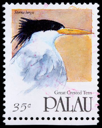 franked: PALAU - CIRCA 1991: A 35-cent stamp printed in the Republic of Palau shows the great crested tern, Sterna bergii, circa 1991