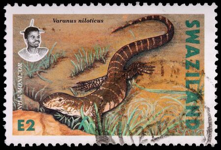 landlocked: SWAZILAND - CIRCA 1992: A 2-lilangeni stamp printed in the Kingdom of Swaziland shows the Nile monitor lizard, Varanus niloticus, circa 1992